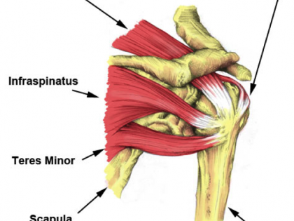 Experiencing Stiffness or Pain in Your Shoulder?